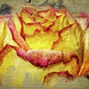 Rose Painting Art Print