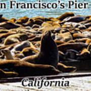 San Francisco's Pier 39 Walruses 1 Art Print