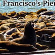 San Francisco's Pier 39 Walruses 2 Art Print