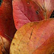 Sassafras Autumn Art Print