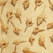 Sea Shell Scroll Art Print
