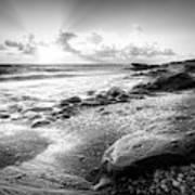 Seashells On The Seashore In Black And White Art Print