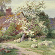 Sheep Outside A Cottage In Springtime Art Print