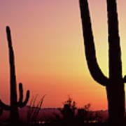 Silhouette Of Saguaro Cacti Carnegiea Art Print