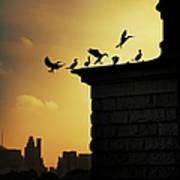 Silhouettes Of Cormorants Art Print
