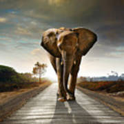 Single Elephant Walking In A Road With Art Print