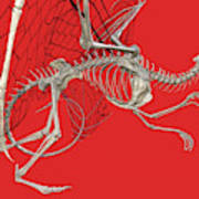 Skeleton Dragon With Red Art Print