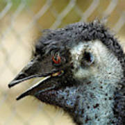 Smiley Face Emu Art Print