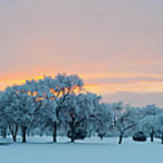 Snow Covered Trees At Sunset Art Print