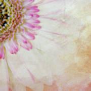 Softly Gerbera Art Print