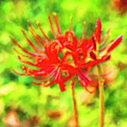 Spider Lily Cezanne Art Print