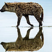 Spotted Hyena Looking For Weak Flamingos Art Print