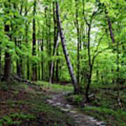 Stone Path with Birch Art Print