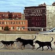 Stray Dogs Stroll Along The Bruckner Art Print