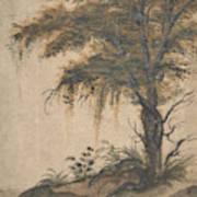 Study Of A Tree Art Print