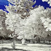 Summer Park In Infrared Art Print