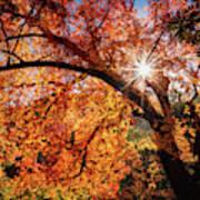 Sun Peaking Through The Autumn Colors  Art Print