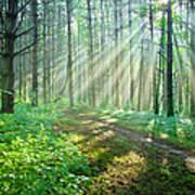 Sunbeams Filtering Through Trees On A Art Print