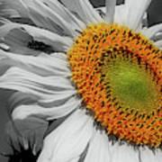 Sunflower And Shy Friend Art Print