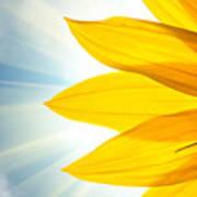 Sunflower Detail Isolated On White Art Print