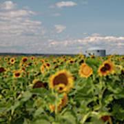 Sunflower Farm Art Print