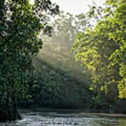 Sunlight Shining Through Trees On River Art Print