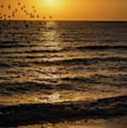 Sunrise Birds Nc Art Print