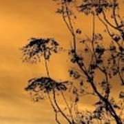 Sunrise Silhouette Art Print