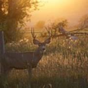 Sunset Deer Art Print