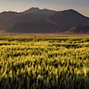 Sunset Over Wheat Art Print