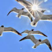 Sunshine And Seagulls Art Print