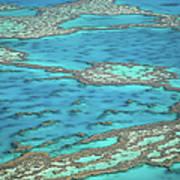 The Big Reef, Whitsunday Islands Art Print