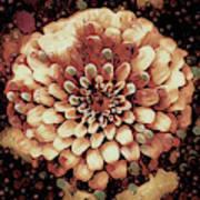 The Bloom Of Fall Art Print