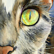 The Eye Of The Kitty Art Print