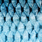 The Fish Scale Close Up Art Print