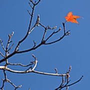 The Last Leaf During Fall Art Print