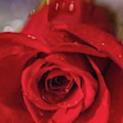 The Magic Of Roses Art Print