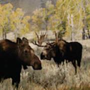 The Moose Rut Art Print