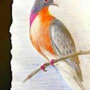 The Passenger Pigeon  Art Print
