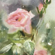 The Rose From A Misty Appalachia Art Print
