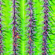 The Spines Of The Cactus Art Print