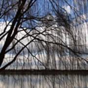 The Veil Of A Tree Art Print