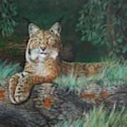 The Wild Cat  Art Print