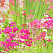 The World Laughs In Flowers - Primula Art Print