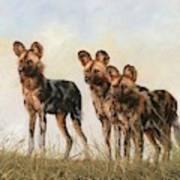 Three African Wild Dogs Art Print
