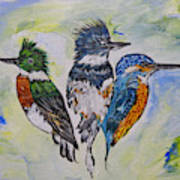 Three Kingfisher Birds - Painting By Ella Art Print