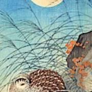 Top Quality Art - Moon And  Quail Art Print