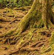Trail Of Roots Art Print