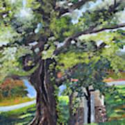 Tree At Cartecay Art Print