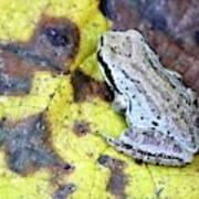 Tree Frog On Yellow Leaf Art Print